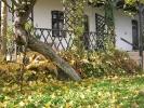 Rokity Jesienią