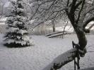 Zimowe Rokity