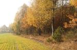 Nasza Jesień_16