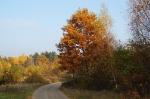 Nasza Jesień_28
