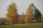 Nasza Jesień_2