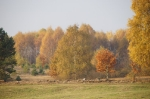 Nasza Jesień_5