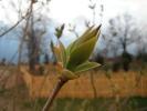 wiosna w Rokitach_12