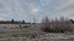 Pierwsza Zima_19
