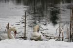 Zimowe widoki_14