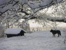 Zimowe widoki_6